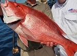 NC Red American Snapper SKIN ON Filet (1 lb)